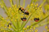 El polen se dispara en más de media península