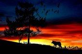 El Gobierno apuesta por consenso en gestión de lobo
