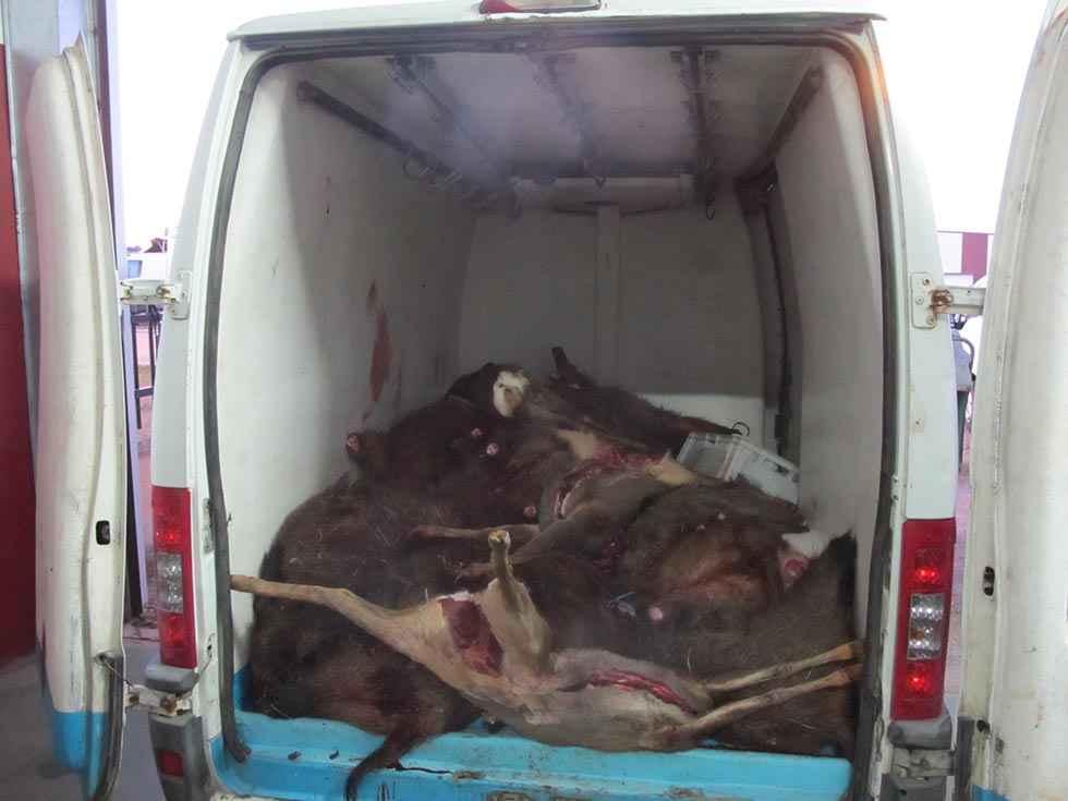 Denunciadas por infracciones con carne de caza