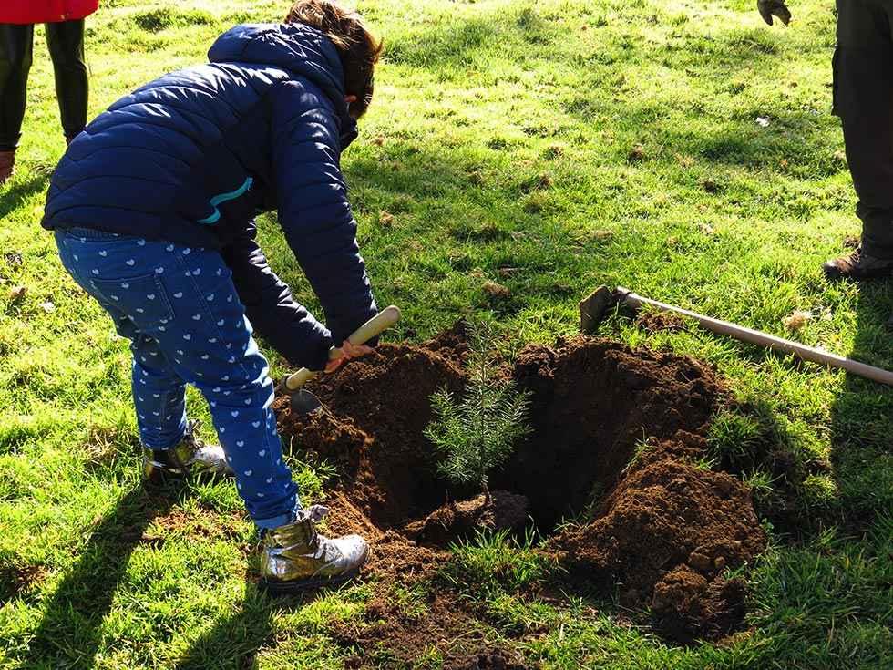 Plantación de árboles en el Aula del Amogable