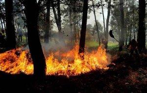 Ayudas para restaurar daños por incendios en bosques