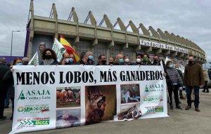 """Las OPAS piden """"menos lobos, más ganaderos"""""""