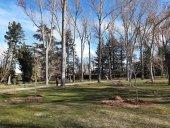 Sustitución e introducción de arbolado en parques