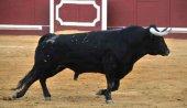 Propuesta de corrida de toros para Soria