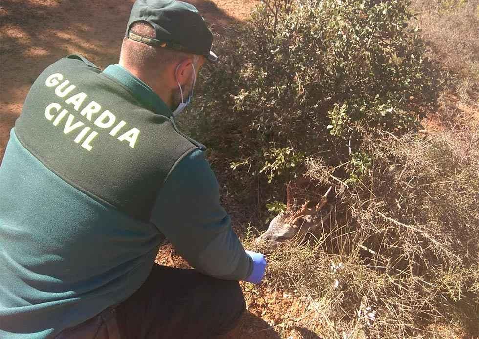 Investigación por delito de caza en Barcones