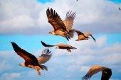 La Junta actualiza censos de flora y fauna