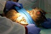 Balance del Centro de Recuperación de Animales Silvestres