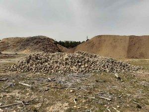 La acera de la CMA termina como biomasa