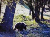 La osezna Éndriga, reintroducida en parque natural