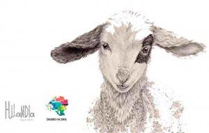 Grupo de actividades en torno a la lana