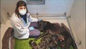 La ONCE entrega 131 perros guía durante Covid