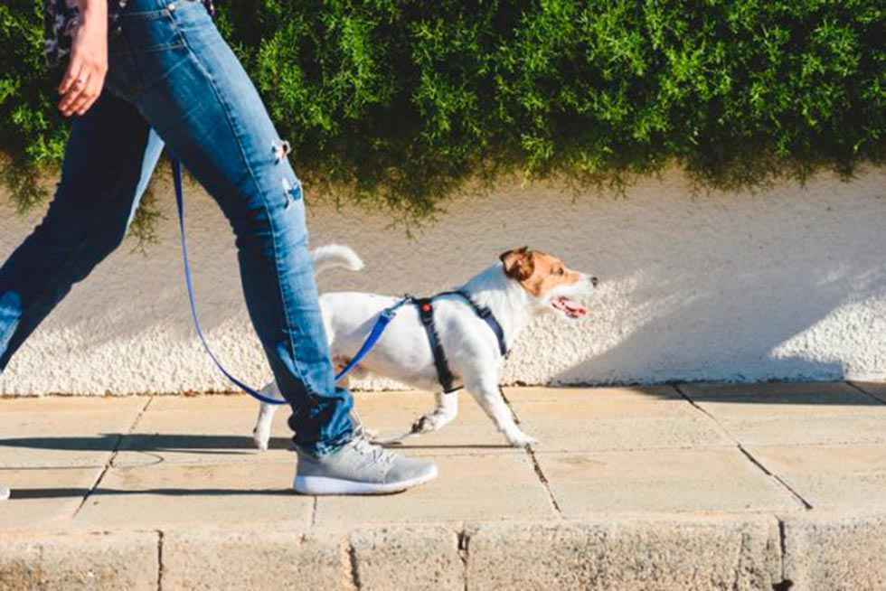Cobo pide más responsablidad a dueños de mascotas