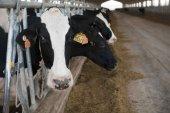 CARTA AL DIRECTOR/ Veinte mil vacas de viaje submarino