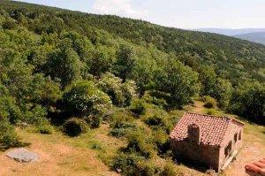 Montes de Soria pide la declaración de Parque Micológico