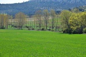 San Isidro: Campos de Soria - fotos