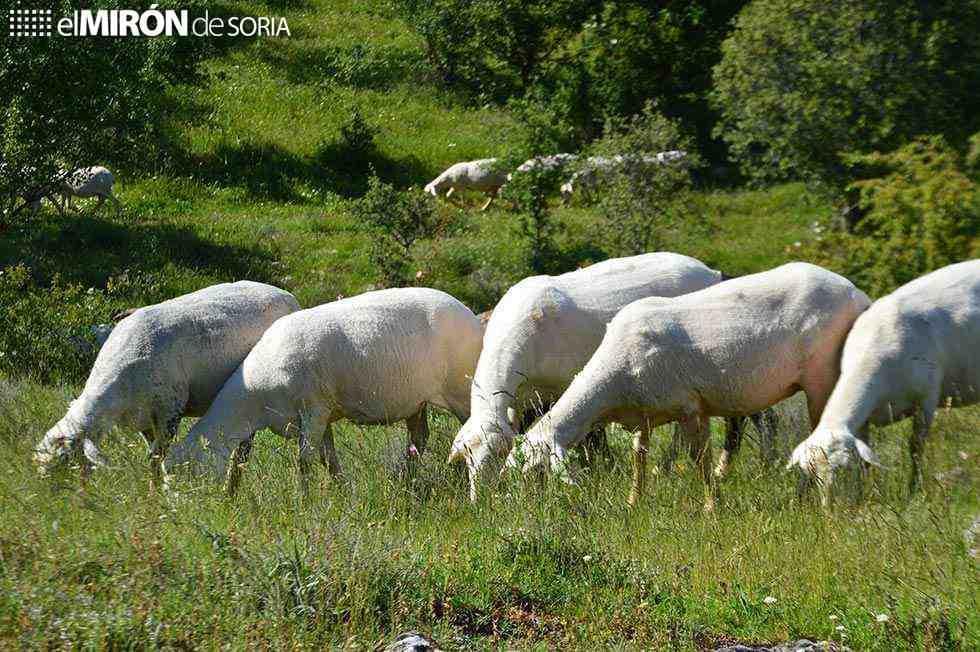 La Junta convoca ayudas de reposición de ganado