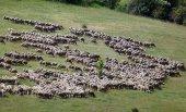 Moción para impulsar el sector caprino y ovino