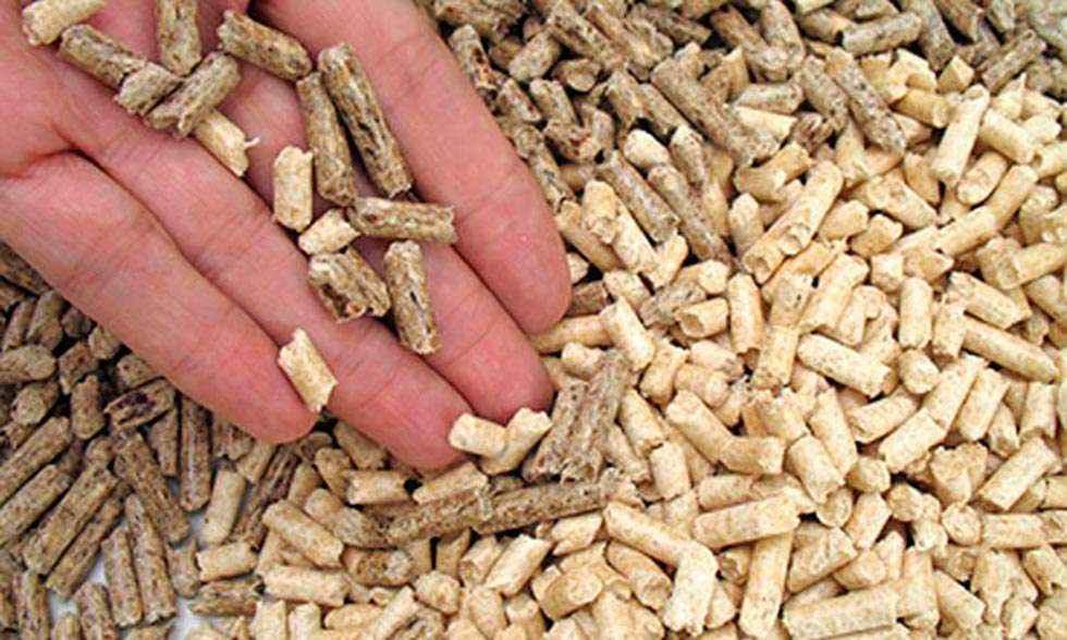 Seminario para asesorar a empresas de biomasa