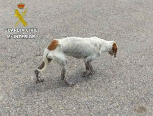 Denunciado vecino de Villarraso por maltrato animal