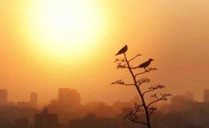 Alerta por intrusión de partículas de polvo africano