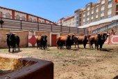 Los toros de Román Sorando ya están en Soria