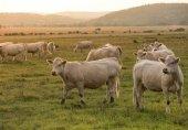 FACUA: El plan España 2050 recoge reducción de carne