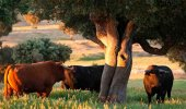 Fallece un varón al ser golpeado por un toro