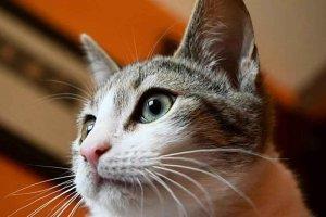 Soria Adopción, sin espacio para más gatos