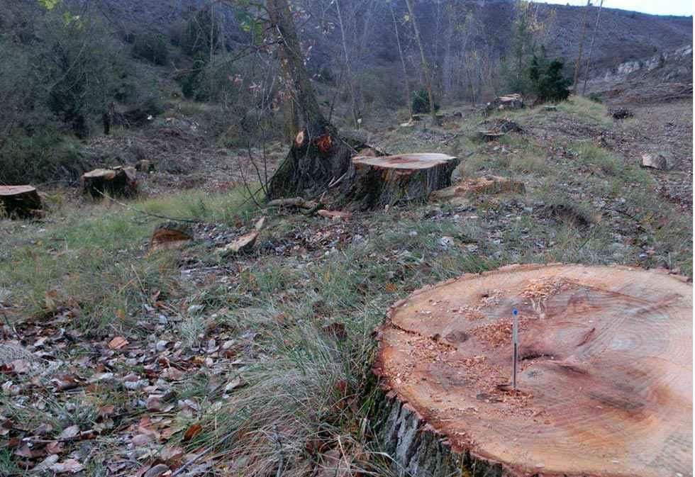 """ASDEN denuncia cortas """"abusivas"""" en río Caracena"""