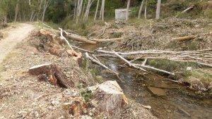 La CHE retira chopos de río Alhama, en Cigudosa