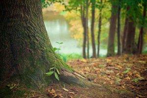 Seminario europeo sobre gestión de espacios forestales