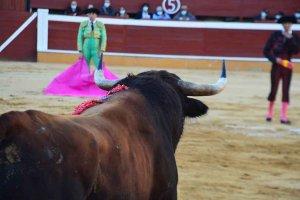 Los Miura debutan en Soria - fotos