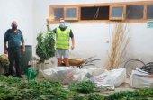Sorprendido con plantación de marihuana