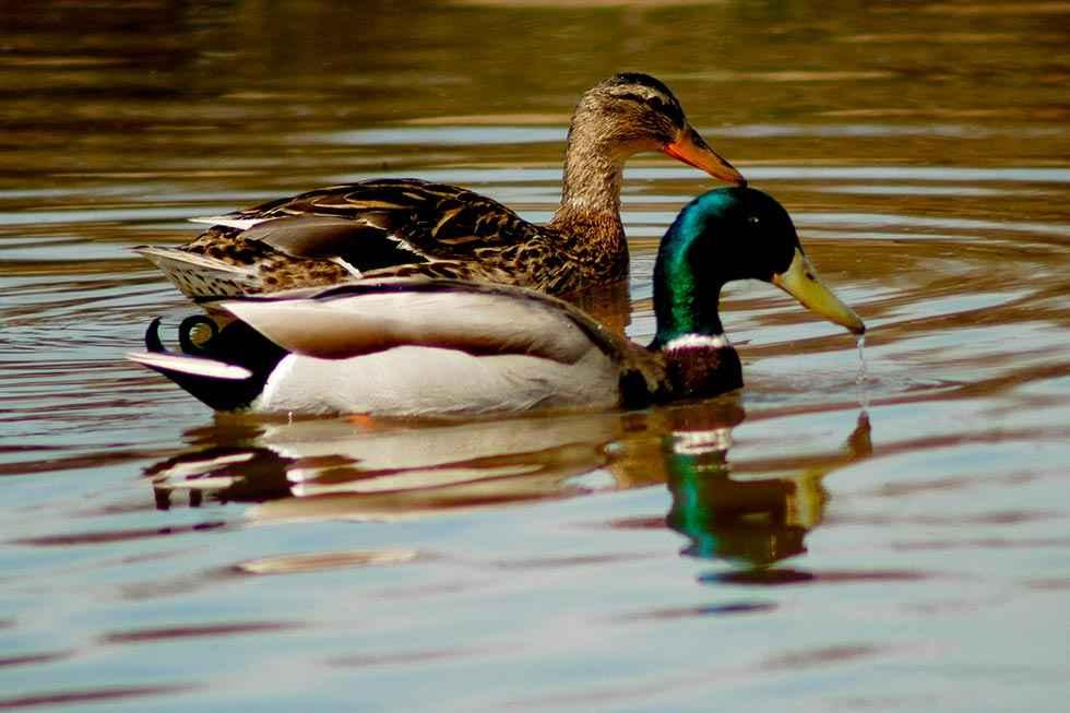 Celebración del Día Mundial de las Aves Migratorias