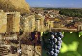 Viaje a la vendimia en la ribera del Duero