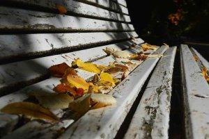 El otoño entra en la dehesa - fotos