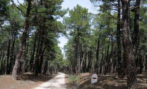 """Declarado el parque micológico """"Montes de Soria"""""""