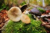 Fungi Selfie en Vinuesa
